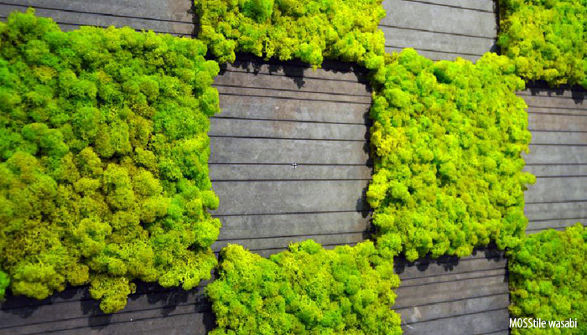 Less obvious New approach to greenery in interior design Moss