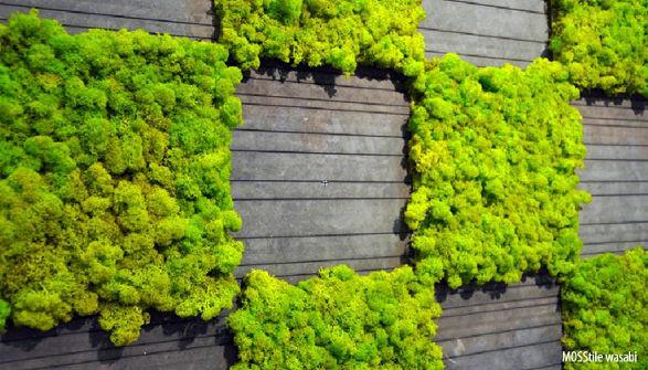 mosstile wall tiles
