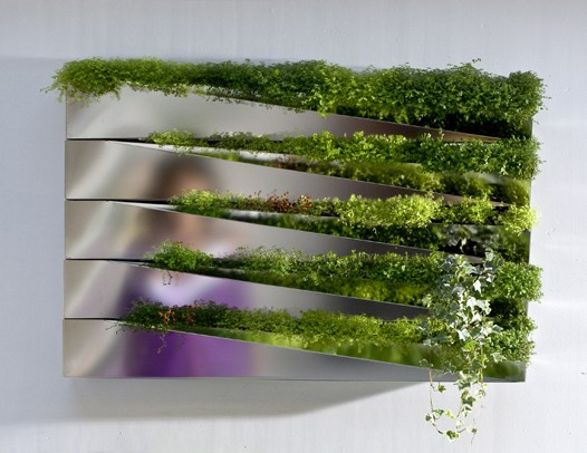 mirror with herbs